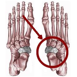 Bones Used In Kicking A Football
